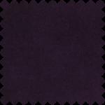 Ligustrum 12